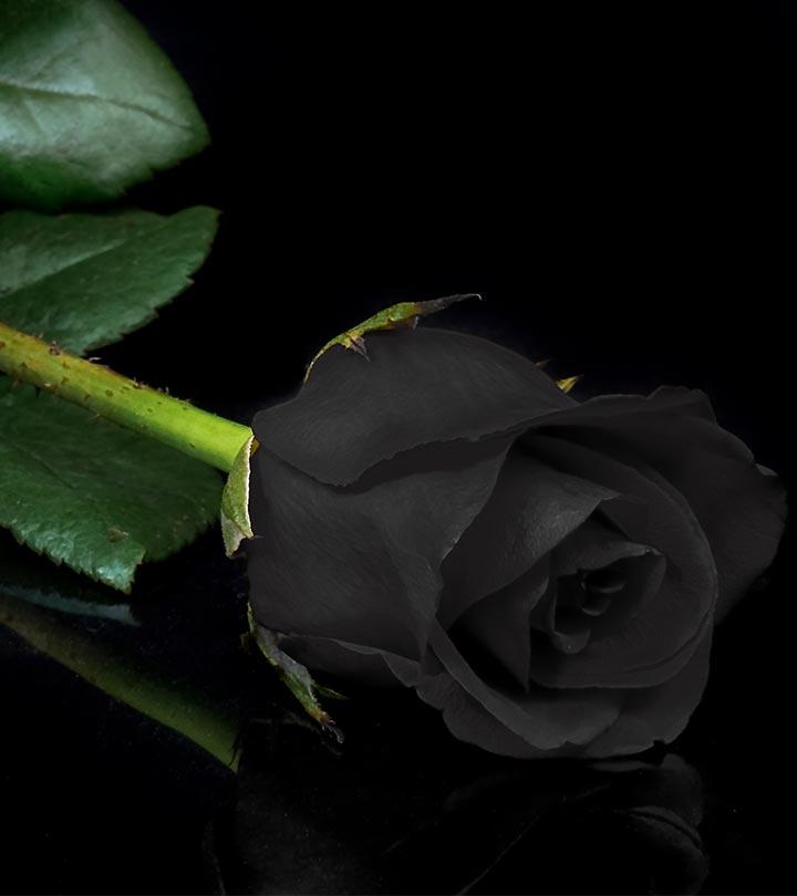 Black Rose Ͽ� Gostica: Ese Koko Amaroza Y'umukara Abaho?