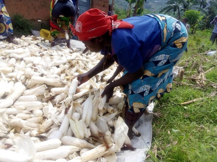 Abahinzi bo bagaragaza ko hari urwego batarageraho kubera ubumenyi bucye muri gahunda zo kwita ku musaruro
