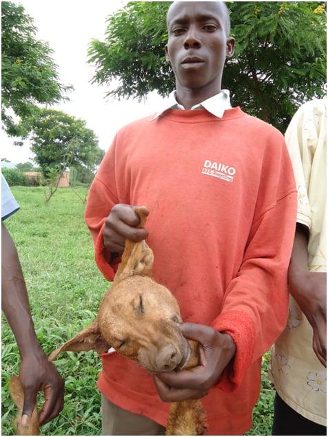 Nyabyenda (mucoma) afite agahanga k'imbwa bishe.